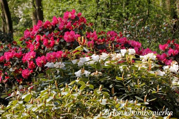 Rhododendron Park Bremen