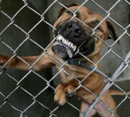 "angry dog biting fence - ""Vicious Propensities"": Dog Owners' Liability and Responsibilty to Spot Warning Signs of Attack"