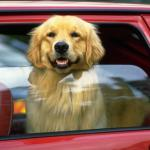 DOG CAR WINDOW 150x150 - New Year, Many New NY and PA Laws For Twin Tiers Residents