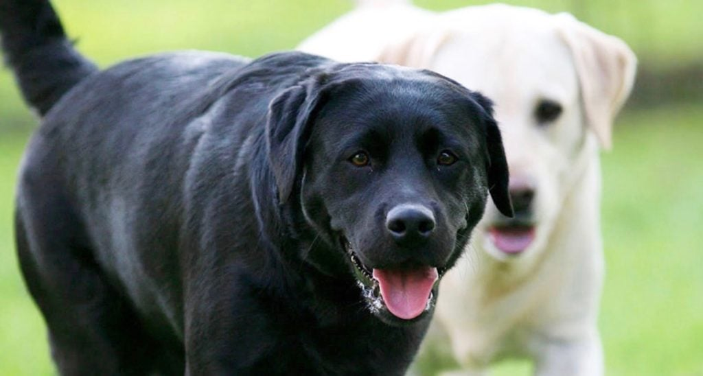 How to Prevent Dog Bite Liability 1024x548 - Elmira Dog Bite Attack Reminds Twin Tiers Residents Of Dangers Facing Dog Owners, Says NY and PA Personal Injury Lawyer