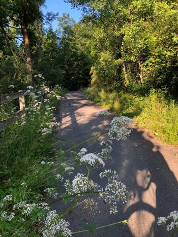 Reed CVT 2 225x300 - A Jewel Of The Finger Lakes: My Bike Commute On The Catharine Valley Trail Was A Ride To Remember