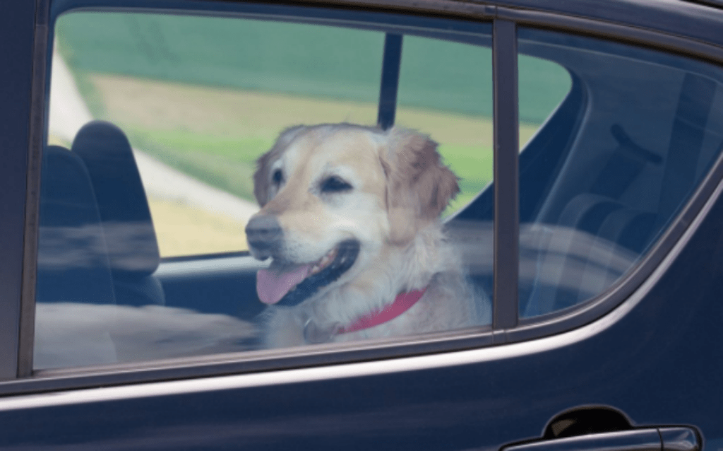 car car feature 1024x638 - New NY Law Allows Emergency Responders To Quickly Rescue Pets In Vehicles