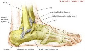 Dry Docked  Three Steps to Avoiding Ankle Injuries