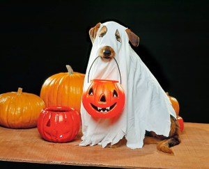 A dog with a sheet draped over it in a ghost costume, holding a Halloween candy bucket shaped like a jack o'lantern.