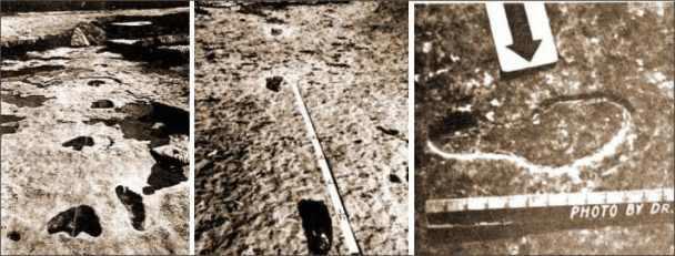 Menschenspuen und Trittsiegel von Dinosauriern in Glen Rose dokumentiert von Cecil Dougherty in Darwins Irrtum bzw. Darwin´s Mistake