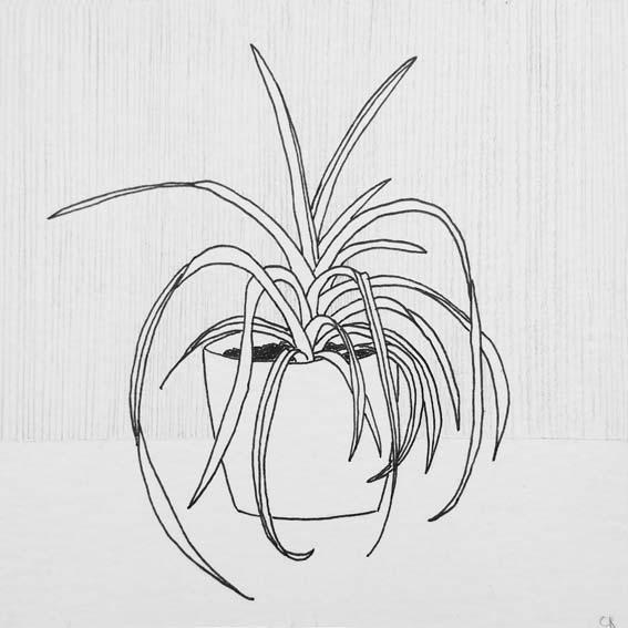 ILLUSTRATIE Plant Chlorophytum - Graslelie