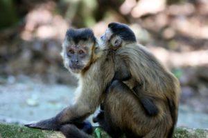 monkey-nails-1200059_1920