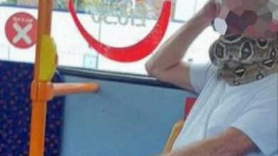 Photo of Man caught wearing a snake as a 'face mask' on a bus