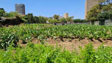 Photo of Homeless Zimbabwean transforms vacant Durban land into lush green garden