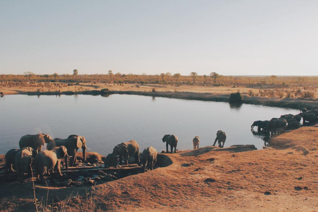 Elephants drinking water by Christine Donaldson