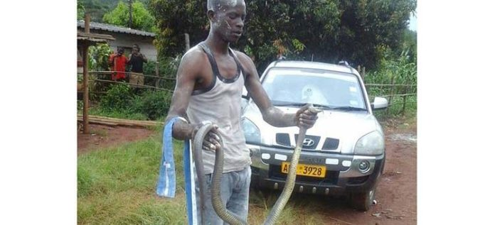 CHAOS AS TSIKAMUTANDA FINDS 2 LARGE SNAKES IN HOUSE