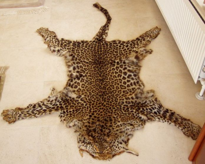 SIBLINGS IN TROUBLE OVER LEOPARD SKIN