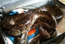 THIS WORLD !! MAN BUSTS PROPHET FEEDING SNAKE