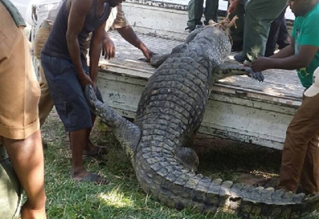 Dead Fisherman's Remains Pulled Out Of Crocodile's Belly