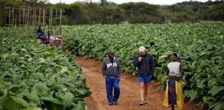 Gvt Throws White Farmers Lifeline