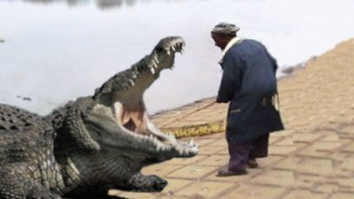 Photo of SHOCKING! MAN KILLED BY CROCODILE WHILE FETCHING WATER