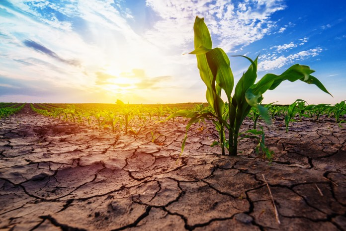 Tough Times For Zimbabwe As Drought Looms