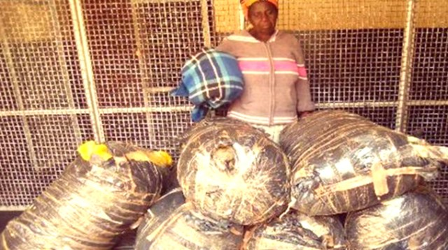 Granny Busted With 228kgs Of Mbanje