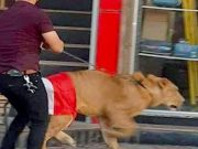 No Stopping For Iraq Anti Govt Protesters As They Bring Lions To Counter Police Dogs