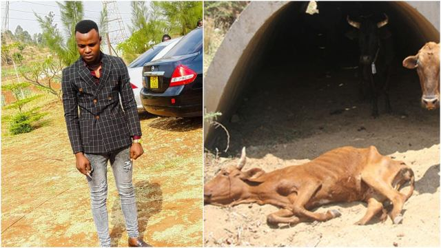 """Butchery Director Who Buys Sick Cattle Speaks - """"I Was Hacked"""""""