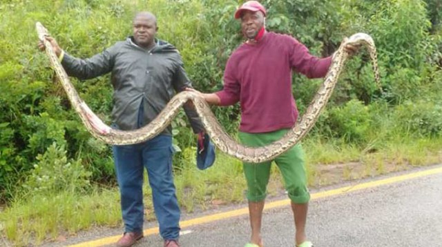 Man dies on the same spot he killed a snake