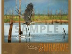 Visions of Zimbabwe - Bird