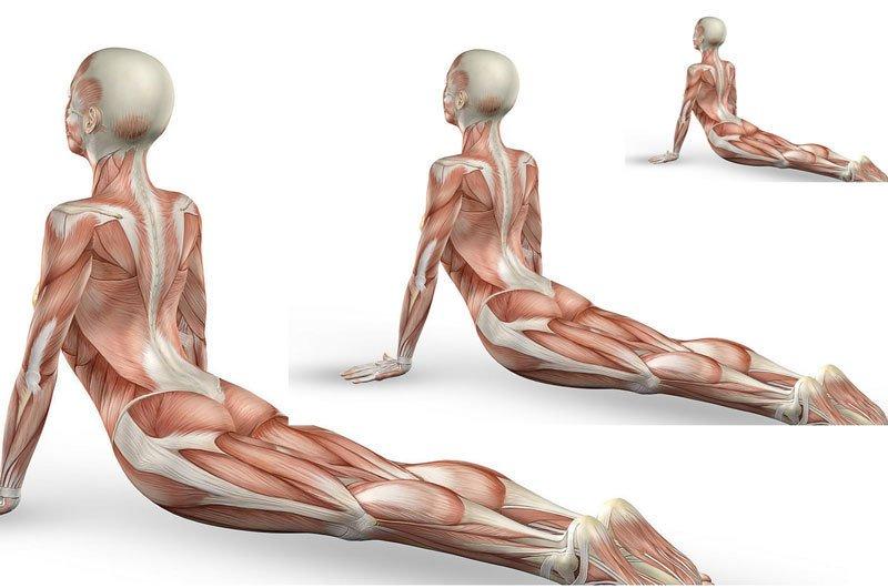 Gimnastika-moteru-vidaus-organams-sustiprinti1 Pratimai gerinantys mažojo dubens organų kraujotaką