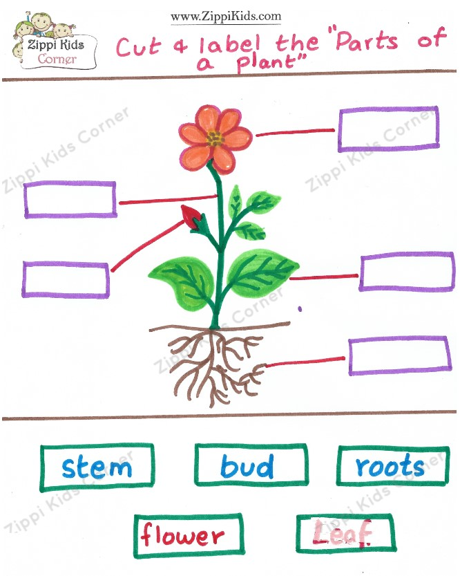 Label the parts of a plant- Plant Life cycle worksheets