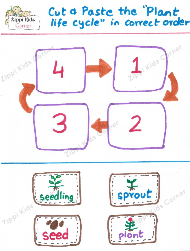 Cut and Paste Plant Life Cycle in correct order-Plant Life cycle worksheets