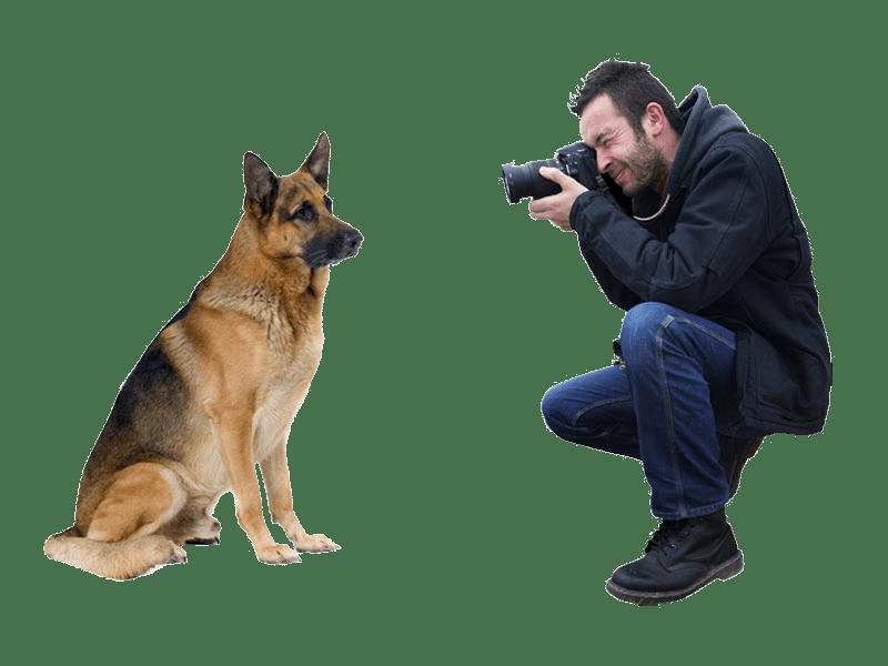 Rainbow Pet Paintings Pet Photo Tips