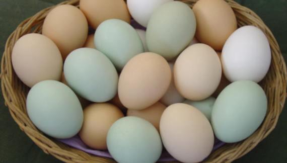 Fertile Hatching Eggs