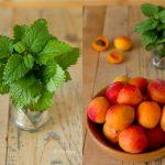 Lemon Balm Apricot Popsicles