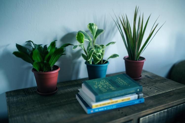 Tipy a triky na pestovanie izbových rastlín