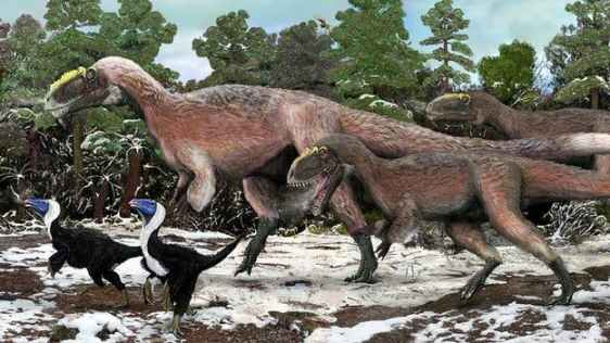 Artist impression of a group of Yutyrannus, the largest feathered animal known to man and a close relative to the T. Rex, which lived during the Cretaceous period. On the far left are two Beipiaosaurus depicted, the previously largest feathered animal.
