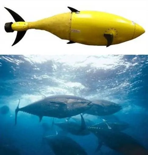 The BIOSwimmer nautical robot takes its inspiration from the tuna. (c) Department of  Homeland Security.