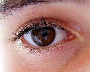 human eye evolution