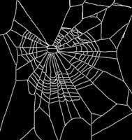 Spider web on marijuana