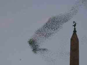 bird-flock