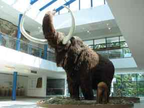 Frozen carcasses of the Woolly Mammoth allow scientists access to well-preserved DNA from these prehistoric giant animals, related to elephants. Apparently, one isolated population of mammoths lived on Wrangel Island in the Arctic Ocean until 4000 years ago.