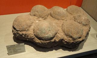 (c) Miquel Crusafont Catalan Palaeontology Institute