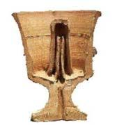 cross_section_pythagorean_cup