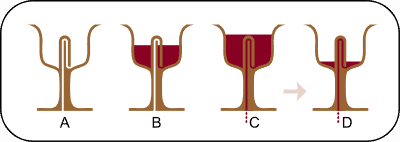 pythagorean_cup_cross_section