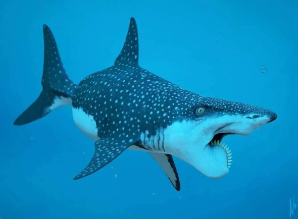 Helicoprion_Shark_by_DirkWachsmuth_h1600