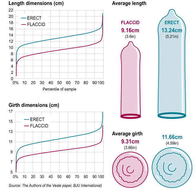 average global penis size