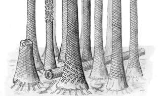 Reconstructed drawing of fossil forest in Svalbard. Image: Cardiff University.