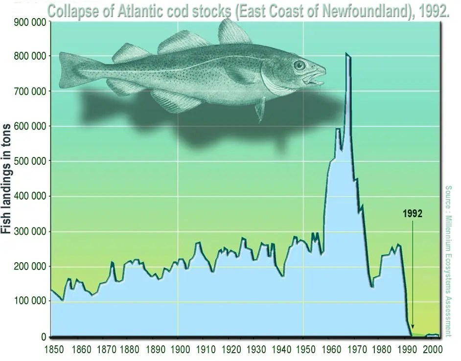 The collapse of the Newfoundland stocks is a good example of what could happen at a much larger scale.