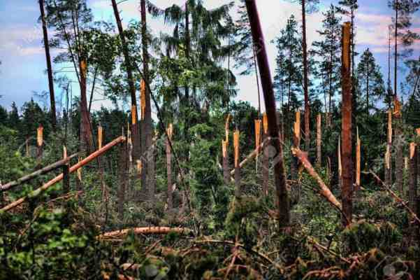 Broken trees in the aftermath of a hurricane storming under Sankt Petersburg, Russia