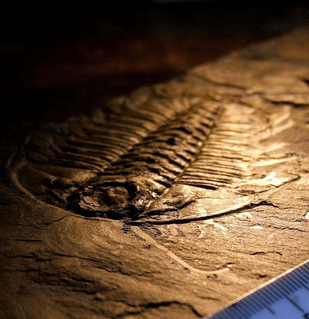 Facts About Everyone S Favorite Fossils Trilobites
