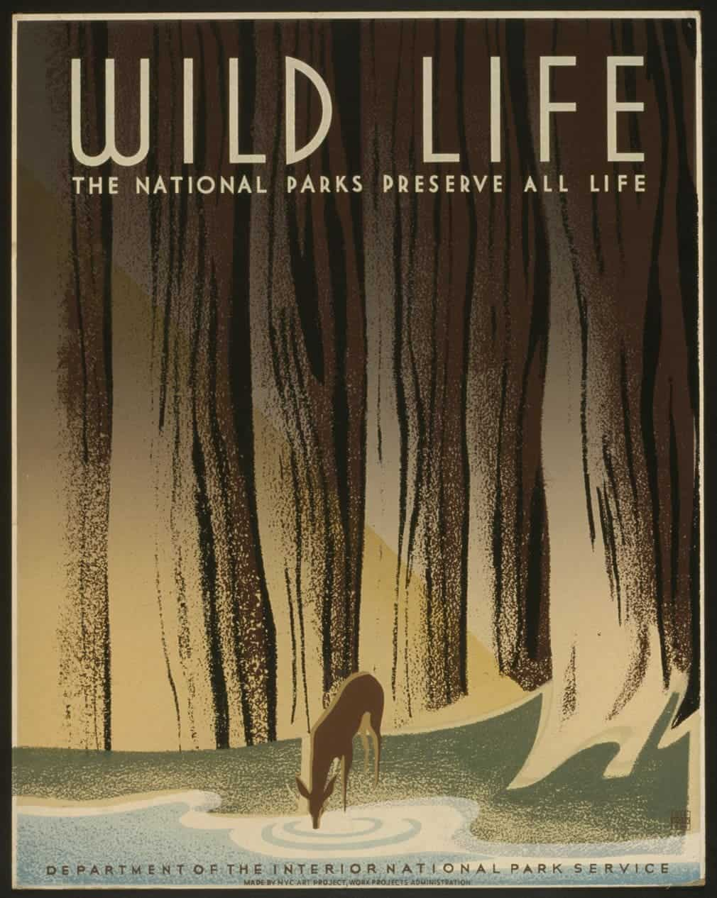 All life is sacred in the national park, 1940.