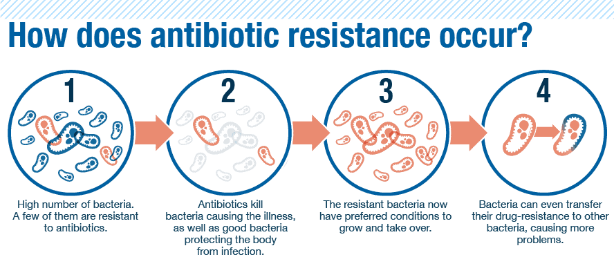 How Does Bacteria Become Resistant In Antibiotics Through Natural Selection